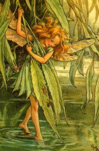 Fairies & Babies